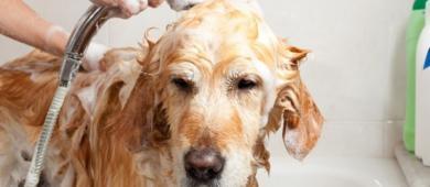 Faz mal dar banho no pet em dias de muito frio?