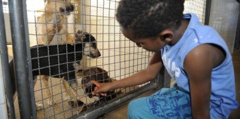 Lei que proíbe sacrifício de animais pelas zoonoses é publicada
