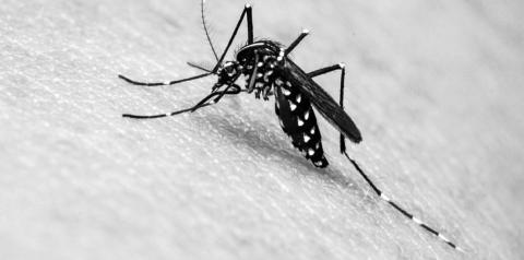 Adolescente de 15 anos morre por dengue tipo 2 em Hortolândia