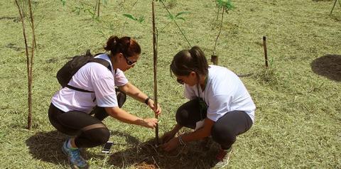 Unimed realiza neste sábado plantio de árvores pelo 12º Programa Vida Verde