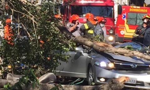 Árvore cai e destrói carro em Paulínia