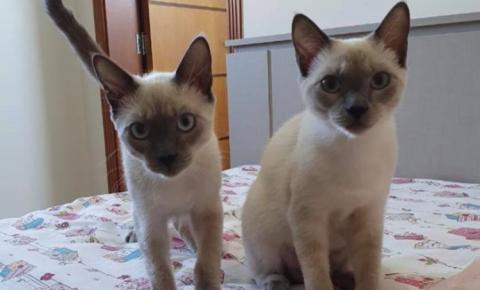 Nova Odessa realiza 1º Drive-Thru Animal para ajudar pets de famílias carentes