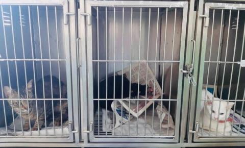Sociedade Protetora dos Animais de S.Bárbara precisa de doação de jornais