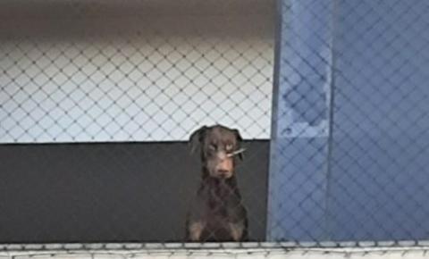 GAMA e equipe do Delegado Bruno Lima resgatam cão com focinho amarrado por abraçadeira