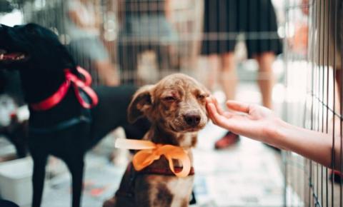 Câmara de Americana aprova projeto que incentiva a adoção de animais