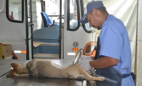 Prefeitura de Hortolândia cadastra animais domésticos para castração