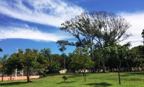 Hortolândia já plantou mais de 40 mil árvores