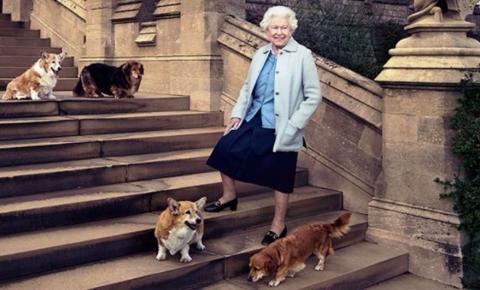 Último cão da raça corgi da rainha Elizabeth II morre aos 14 anos