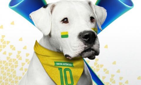 Veterinário fala sobre cuidados com animais durante a Copa do Mundo