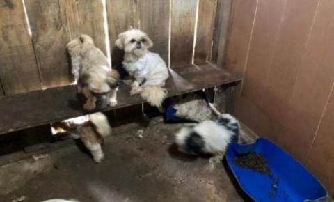 Em Curitiba, 43 cachorros são resgatados de canil clandestino