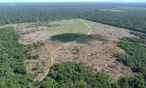 Desmatamento pode elevar temperatura na Amazônia em 1,45°C