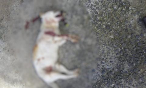 Cachorro é executado no Cruzeiro do Sul, em Santa Bárbara