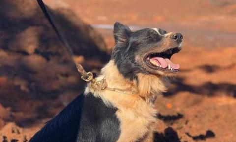 Responsável por localizar vítimas de Brumadinho e Mariana, cão Thor morre em MG