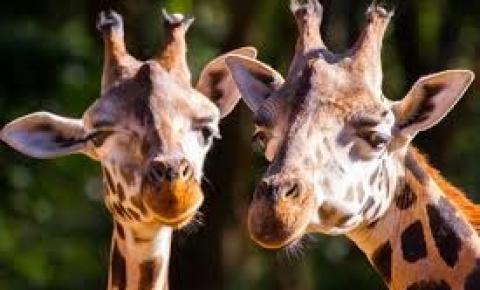 Live mostrará rotina de bichos no Zooparque de Itatiba
