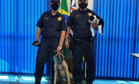 Hortolândia lança concurso para escolha de nome do cão da Guarda Municipal