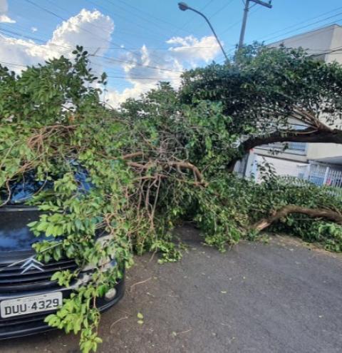 Árvore de 10 metros cai sobre carro em Americana