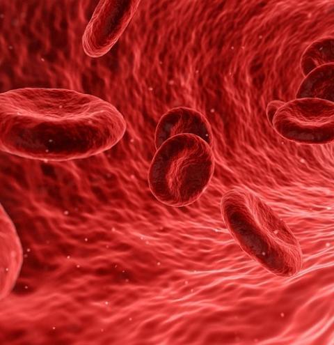 Cientistas anunciam a descoberta de um novo órgão do corpo humano