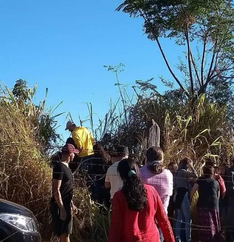 Visitantes danificam campo de girassóis em Sumaré