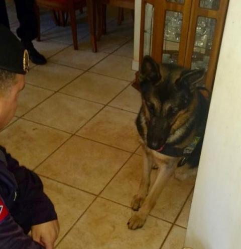 Cão farejador auxilia na prisão de cinco em Americana