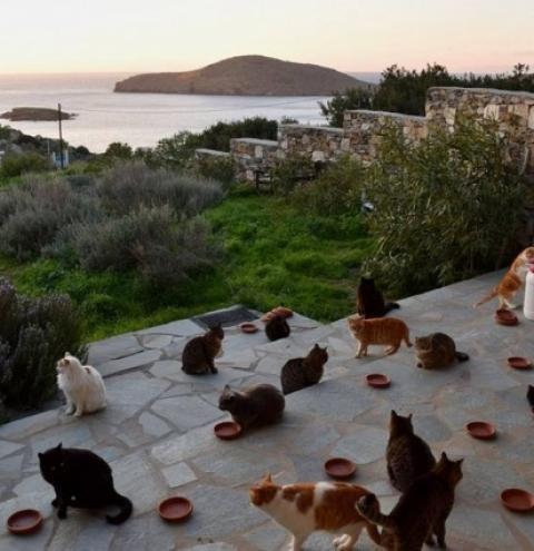 Abrigo para gatos em ilha paradisíaca na Grécia abre vaga de emprego