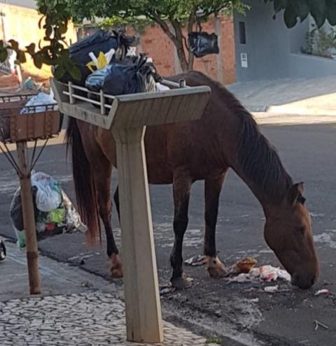 Bois e cavalos 'invadem' vias públicas em Nova Odessa