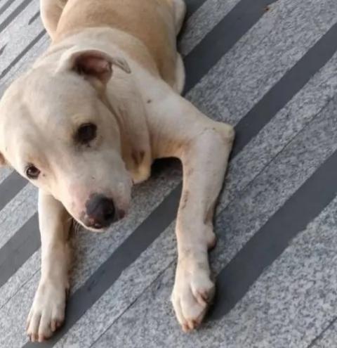 Cachorro permanece na porta de hospital à espera do dono internado